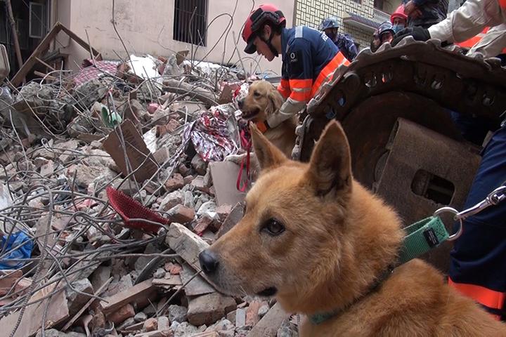 Nepal earthquake response: A-PAD/PWJ team begins response in ...